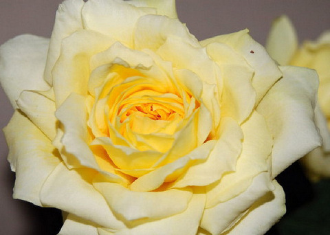 01-6-05-5 roses_008.jpg