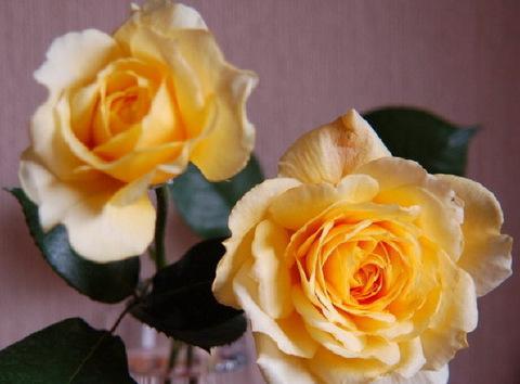 11-6-05-5 roses_090.jpg