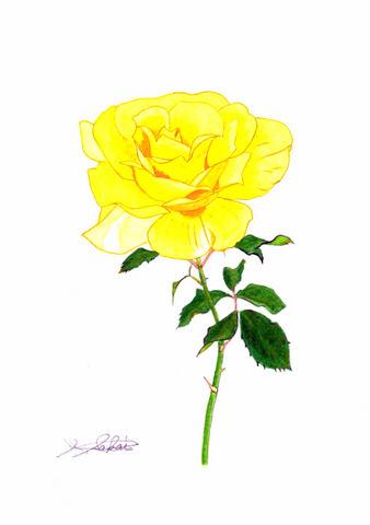 13-150801スイスベルン 黄薔薇.JPG
