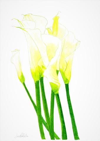 omitama calla lily.jpg