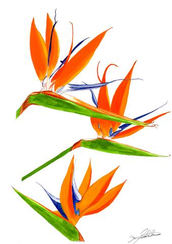 190121極楽鳥花.jpg